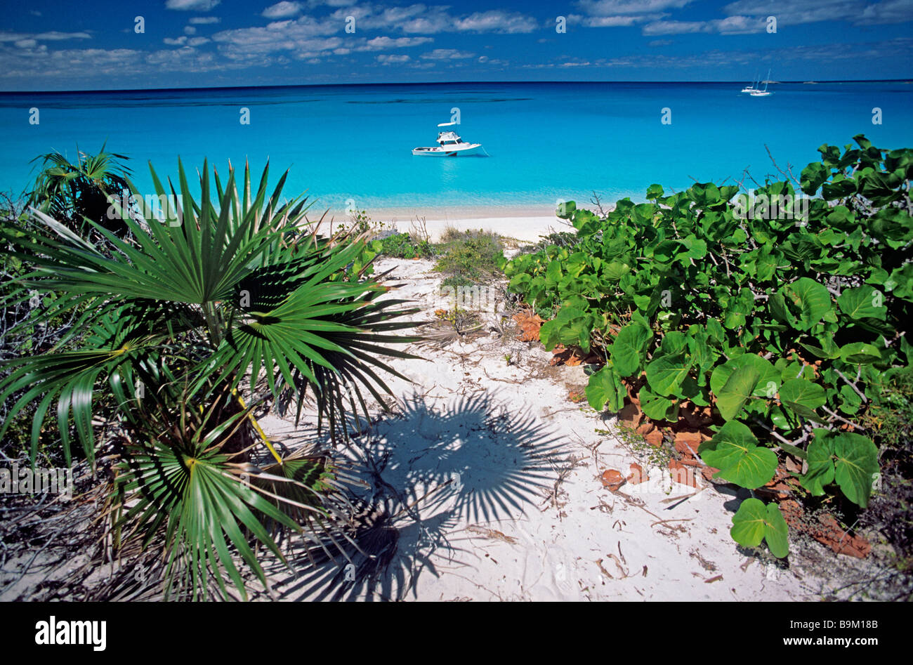 Bahamas Conception Island National Park Coastal Vegetation And