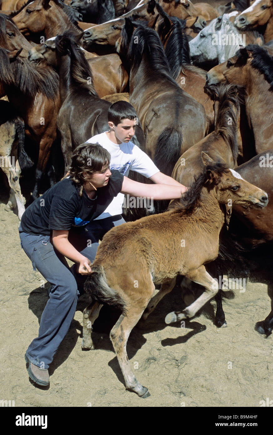 childrens are trying to catch a colt during the festival called Rapa das Bestas in Sabucedo Galicia Northwestern - Stock Image