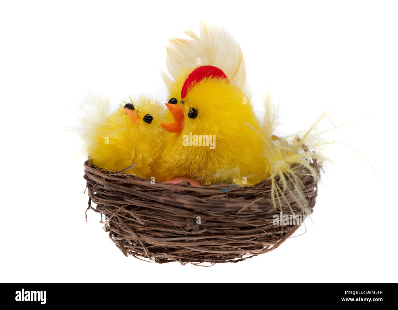yellow easter chicks in a basket isolated on a white background Stock Photo