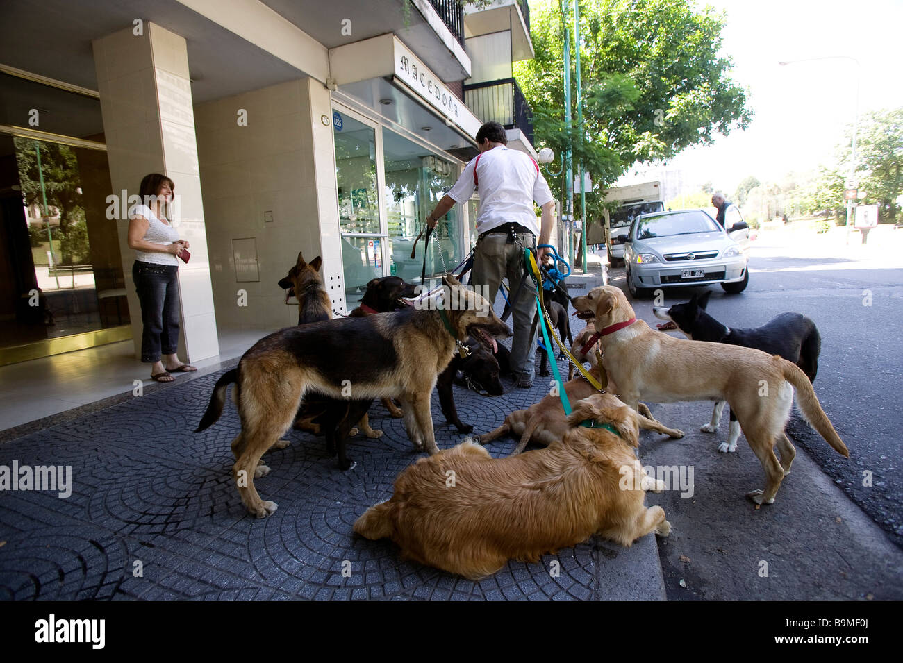 Argentina, Buenos Aires, dog walker in Belgrano District - Stock Image