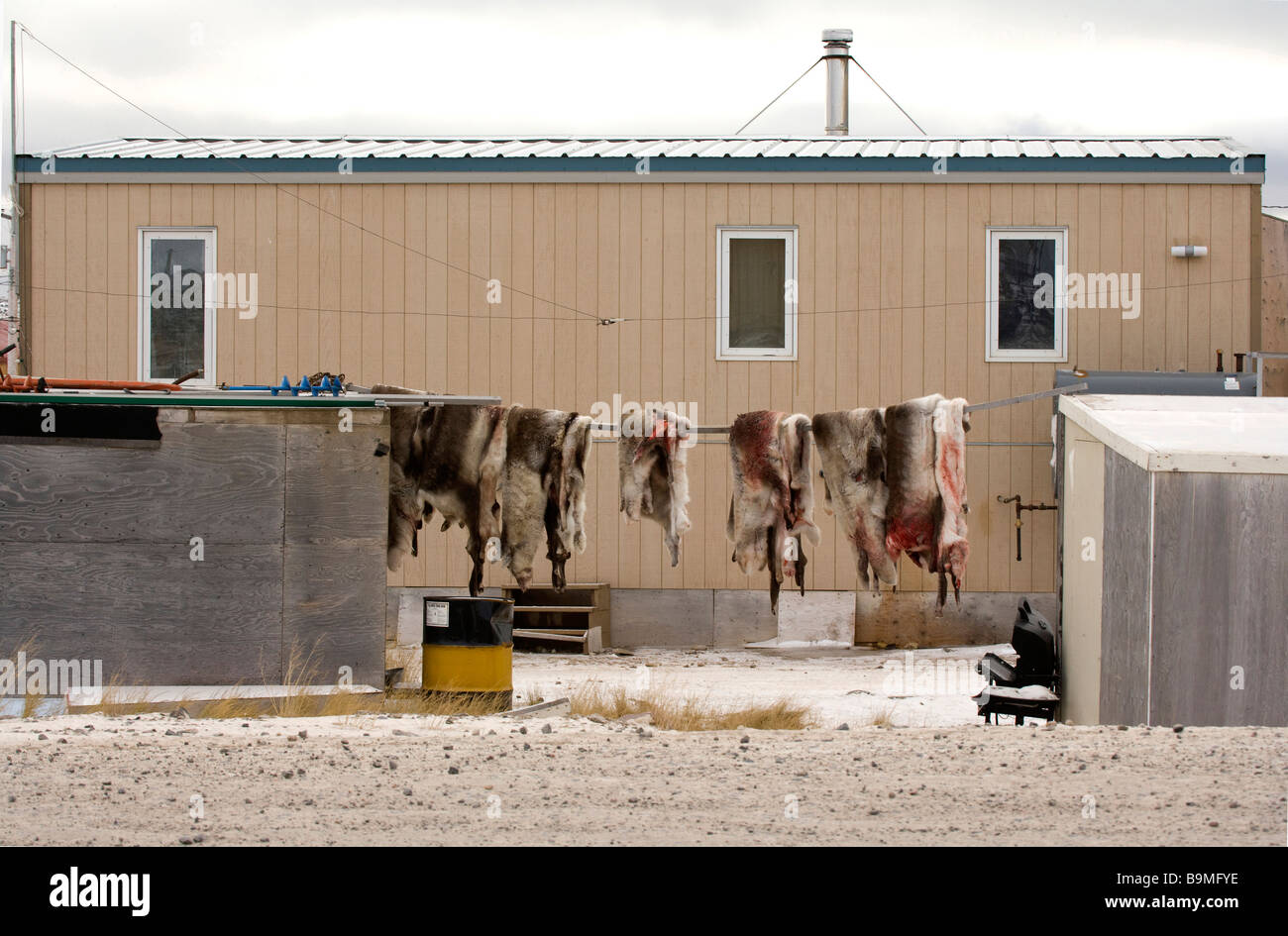 Row of deer skins hanging outside building in Taloyoak inuit settlement Nunavut, Canadian arctic, Canada - Stock Image