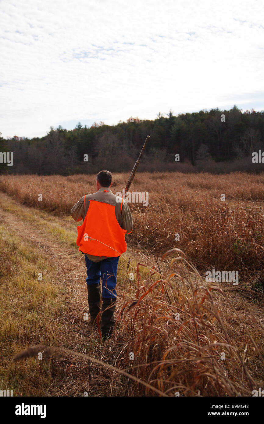 bd1bfa7d24fbe Hunter walking a field in search of game Shotgun and orange vest - Stock  Image