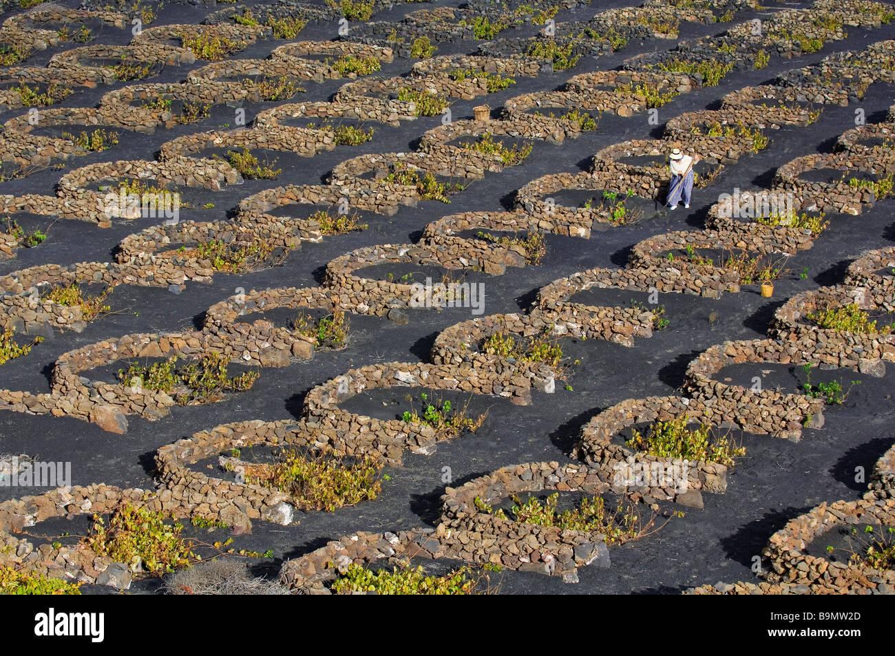 Spain, Canary Islands, Lanzarote Island, Biosphere reserve, Biosphere reserve, La Geria, peasant working in the - Stock Image