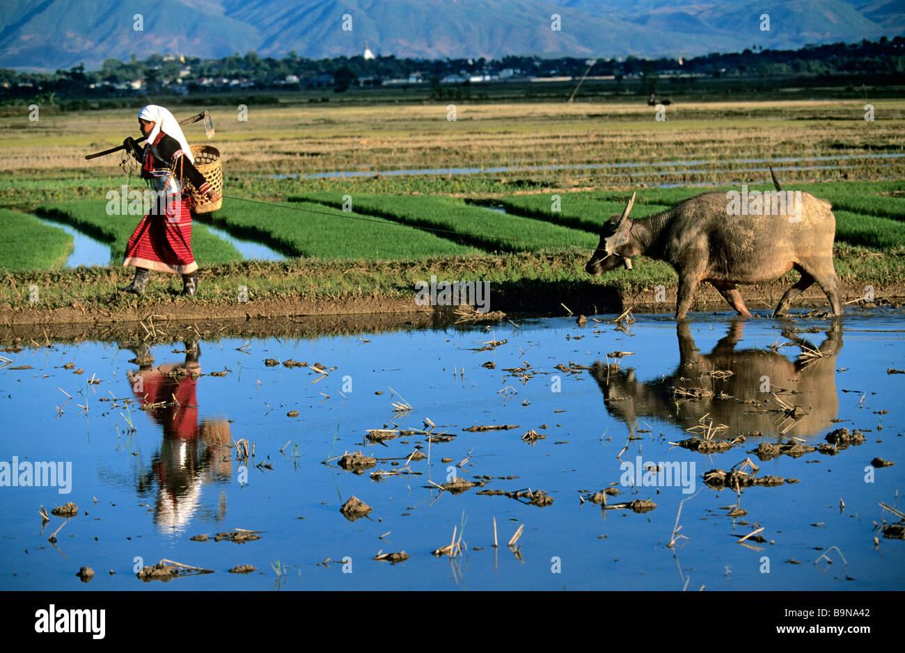 Myanmar (Burma), Silver Palung ethnic group - Stock Image