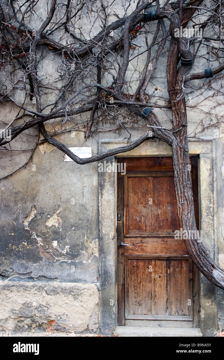 Strahov monastery monastic cell entrance covered with vines. Stock Photo