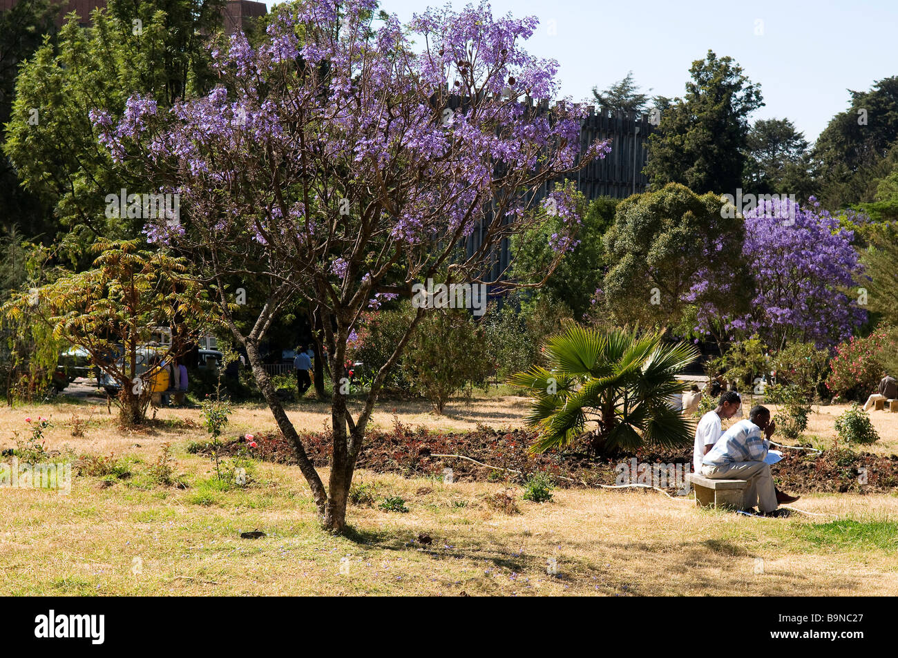 Ethiopia, Addis Ababa University Stock Photo: 23212735 - Alamy