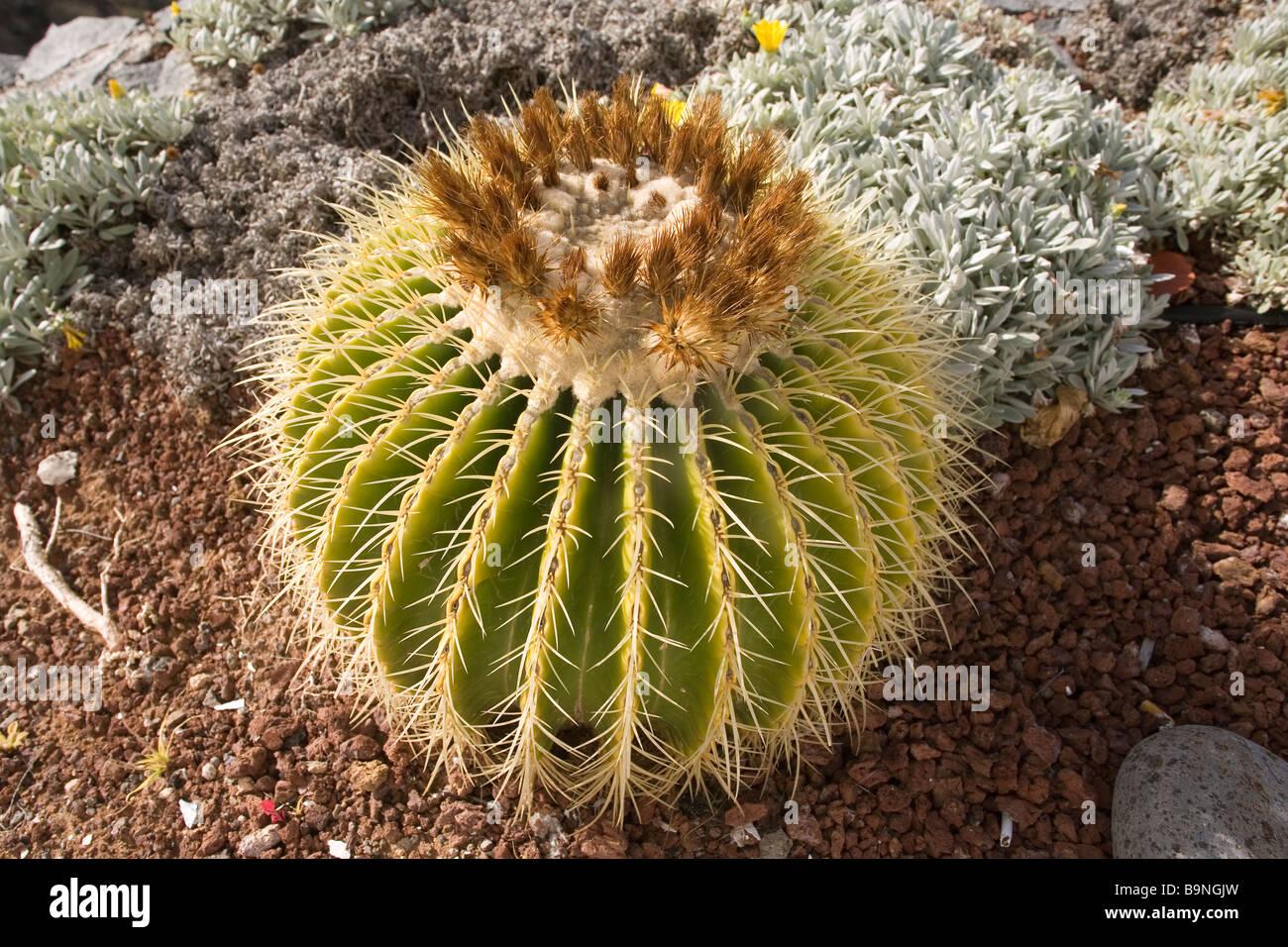 Cactus garden spain stock photos cactus garden spain for Cactus santiago