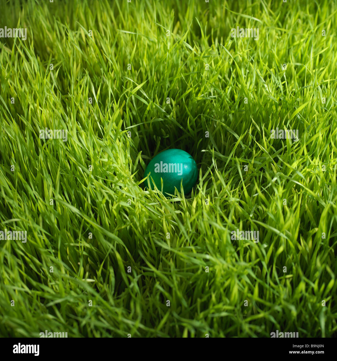 Hidden Easter Eggs High Resolution Stock Photography and Images