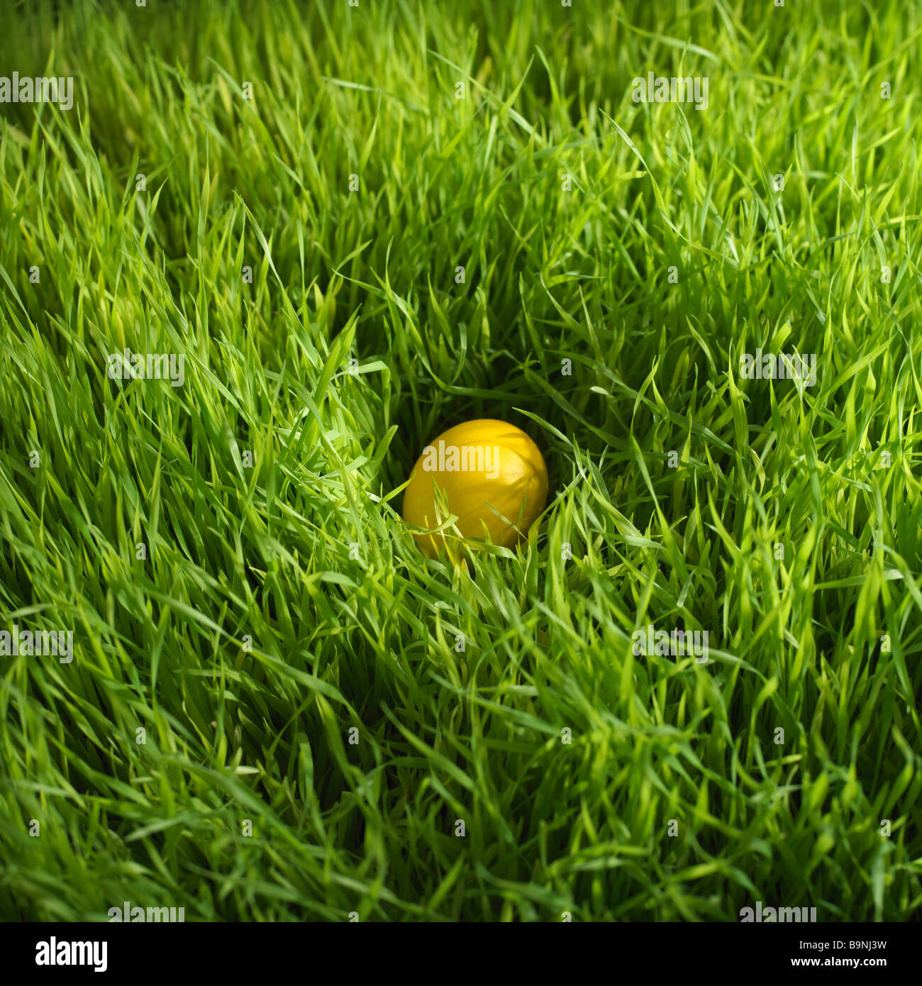 colored Easter egg hidden in grass - Stock Image