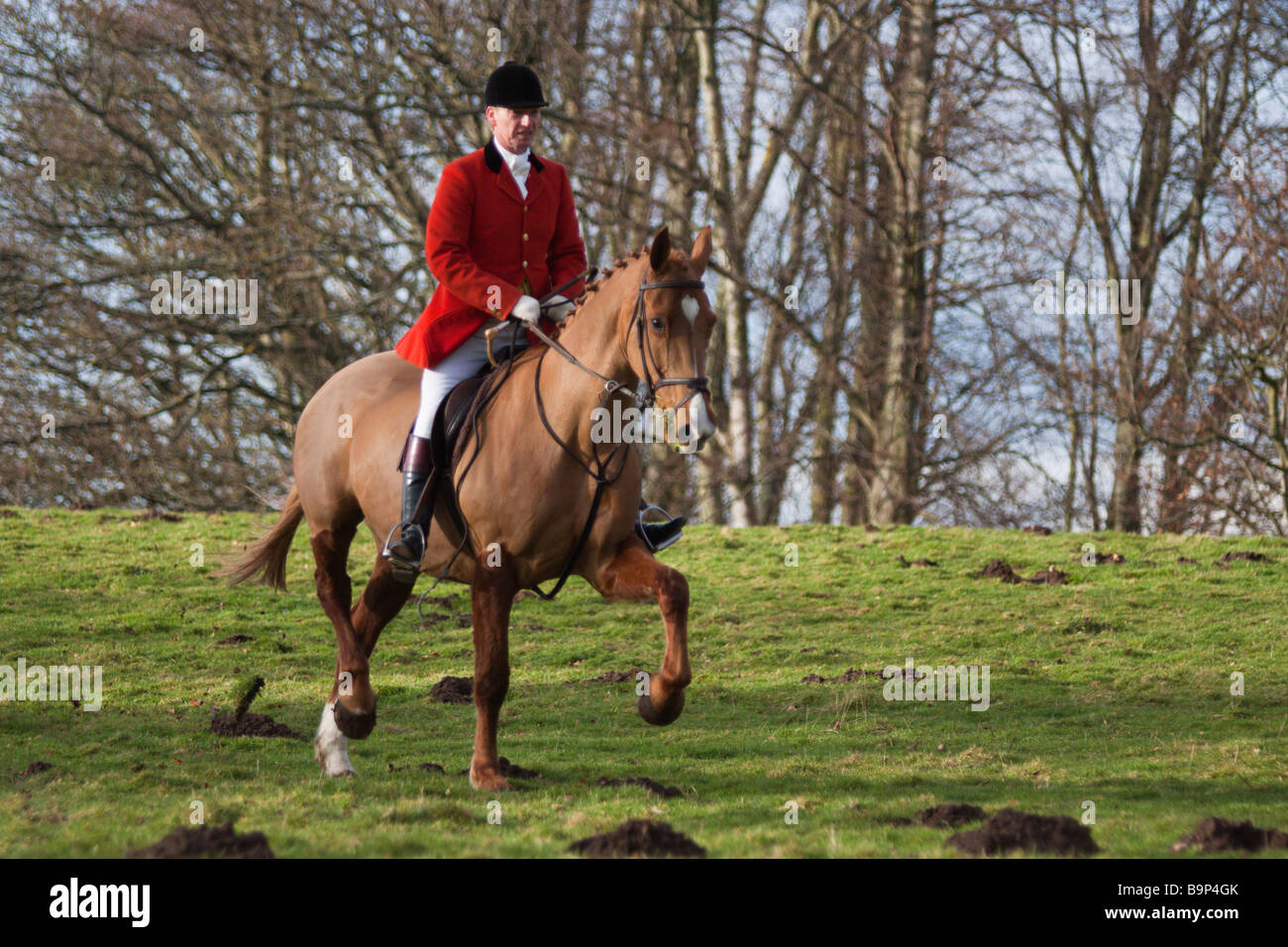 Master Of The Hunt Wearing Hunting Pink Red On Horseback Stock Photo Alamy