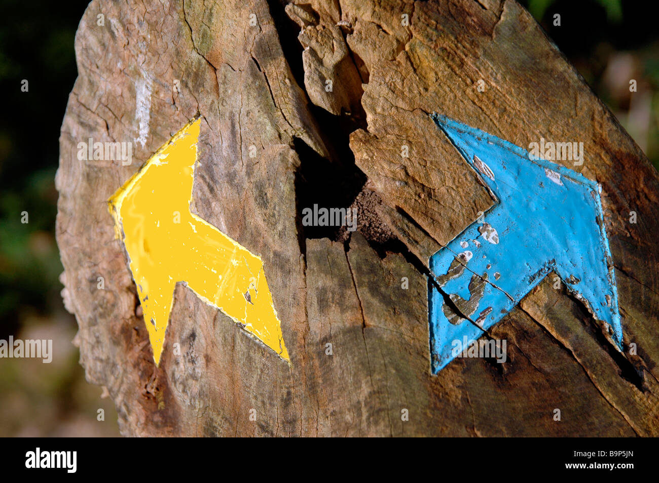 Painted arrows pointing opposite directions on a tree stump. - Stock Image