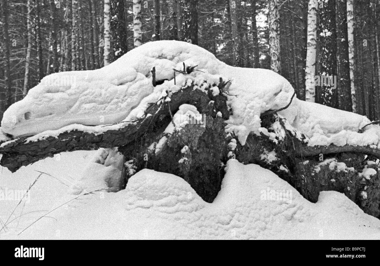 The snow on the fallen tree resembles a water lizard - Stock Image
