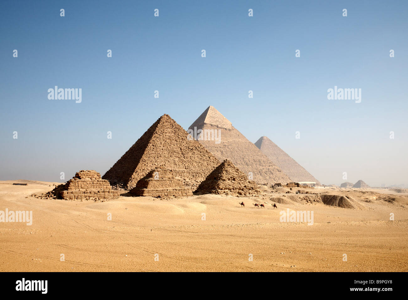 Camels approach the Giza pyramids. - Stock Image