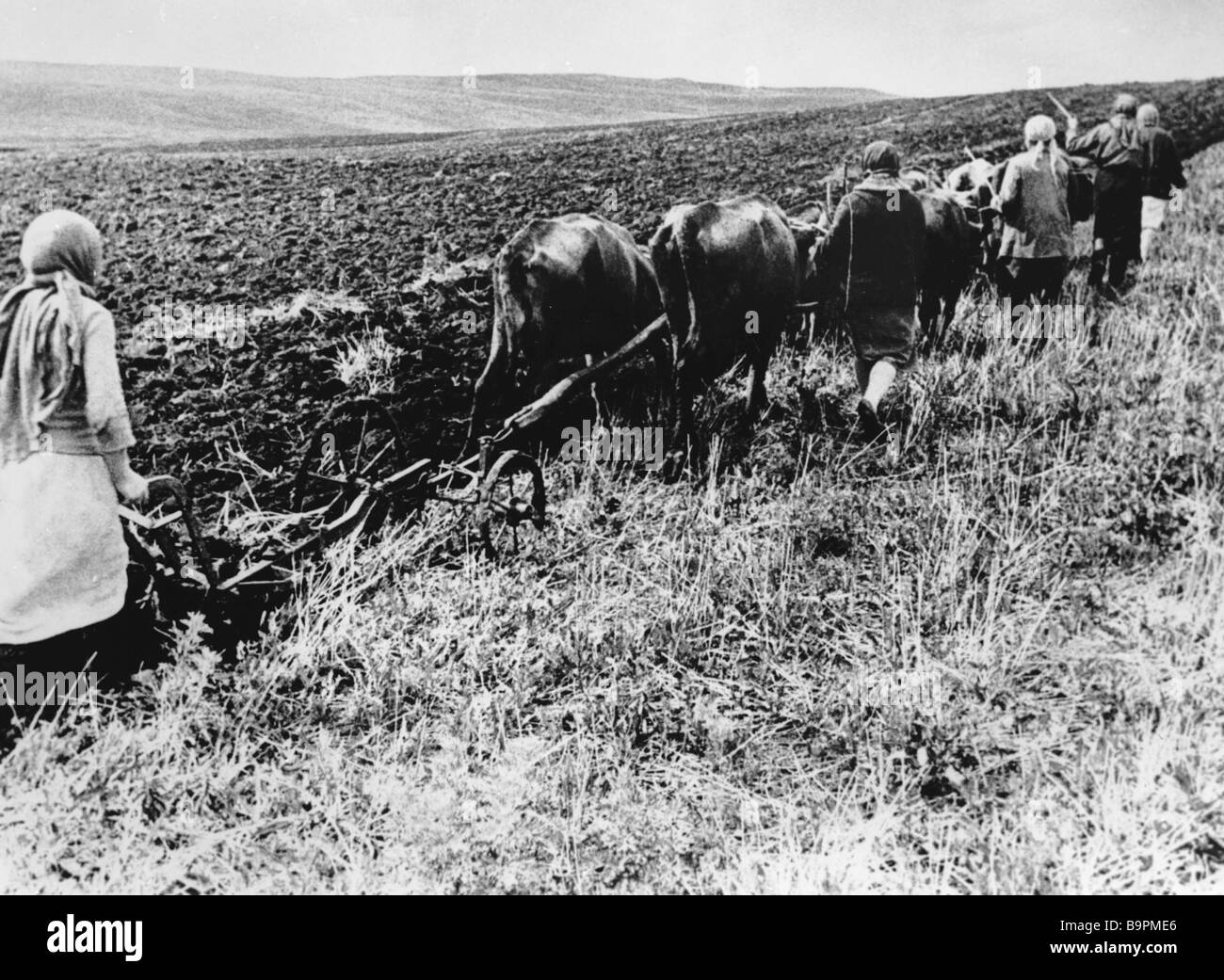 Farmers plough with cows at wartime - Stock Image