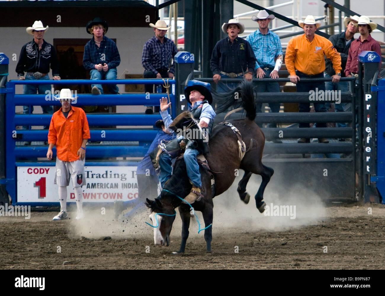 Cowboy rides bucking bronco Cody Nite Rodeo Wyoming USA - Stock Image