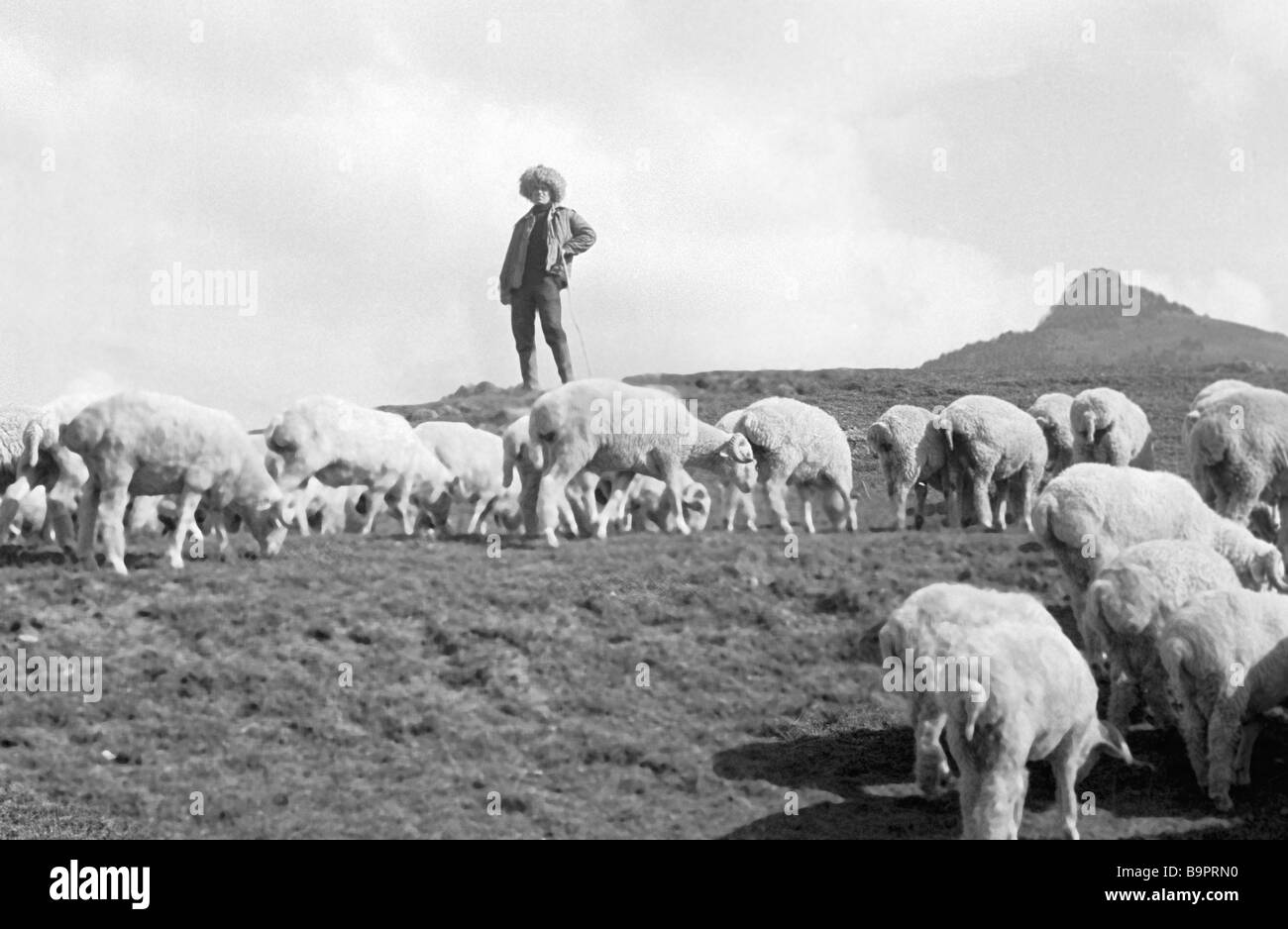 A Shepherd With Flock Of Sheep On Mountain Pasture