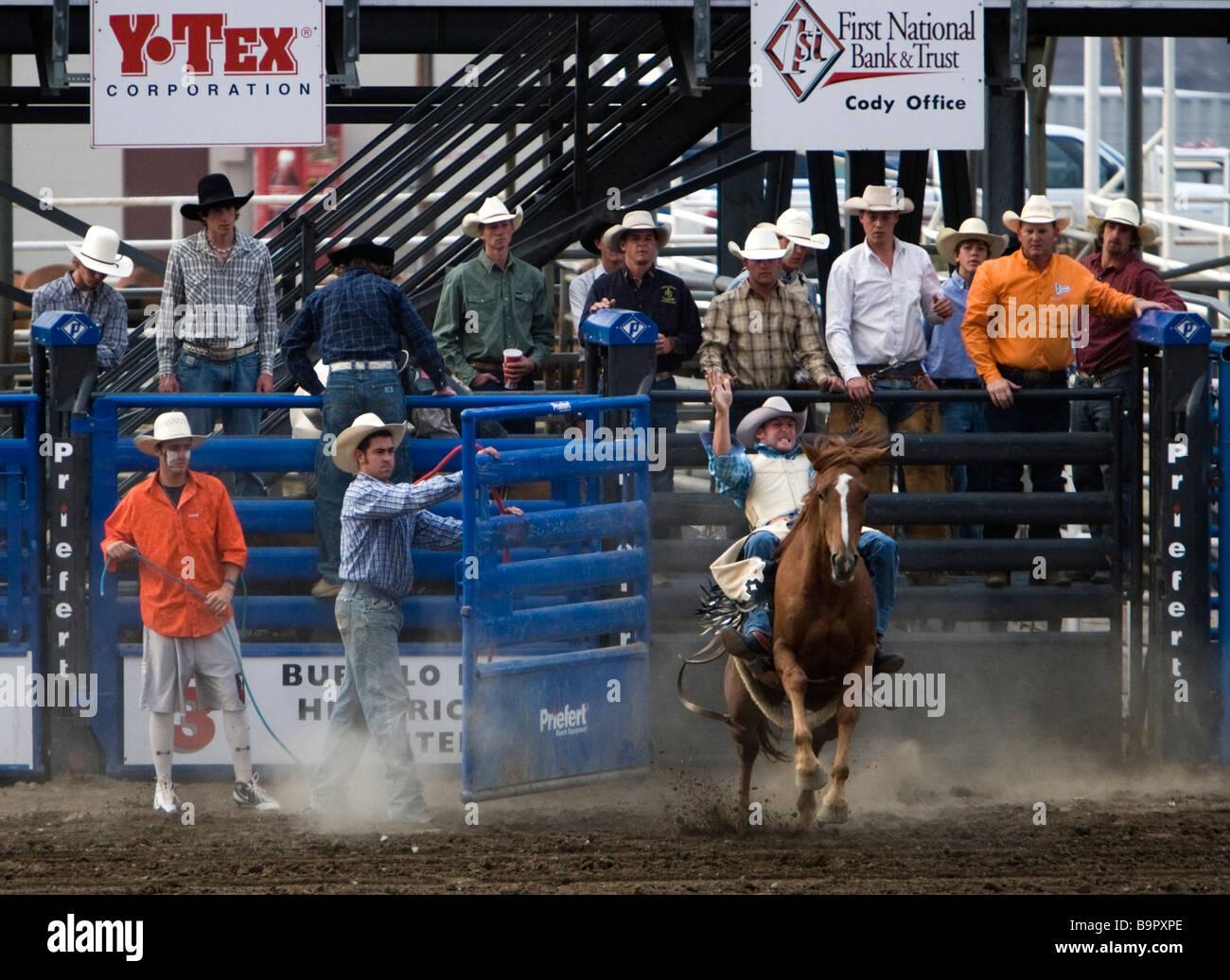 Cowboy rides bronco bucking from chute Cody Nite Rodeo Wyoming USA - Stock Image