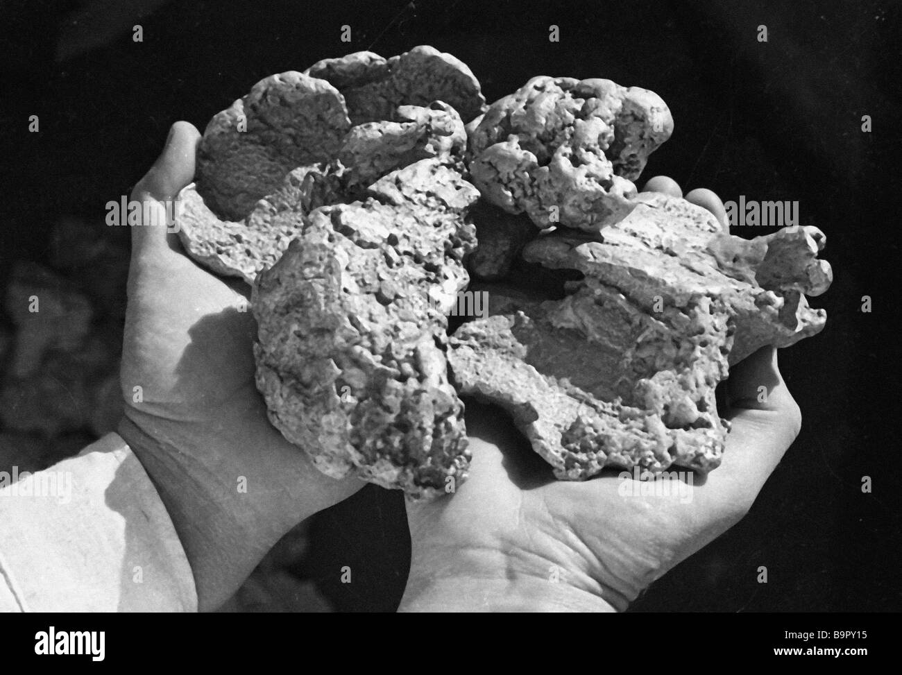 A gold nugget weighing 2 5 kg - Stock Image