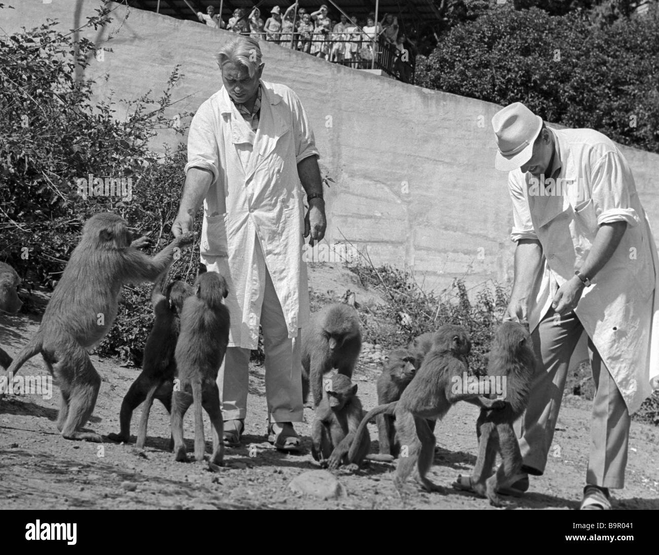 Workers of the Sukhumi monkey colony center with their charges - Stock Image