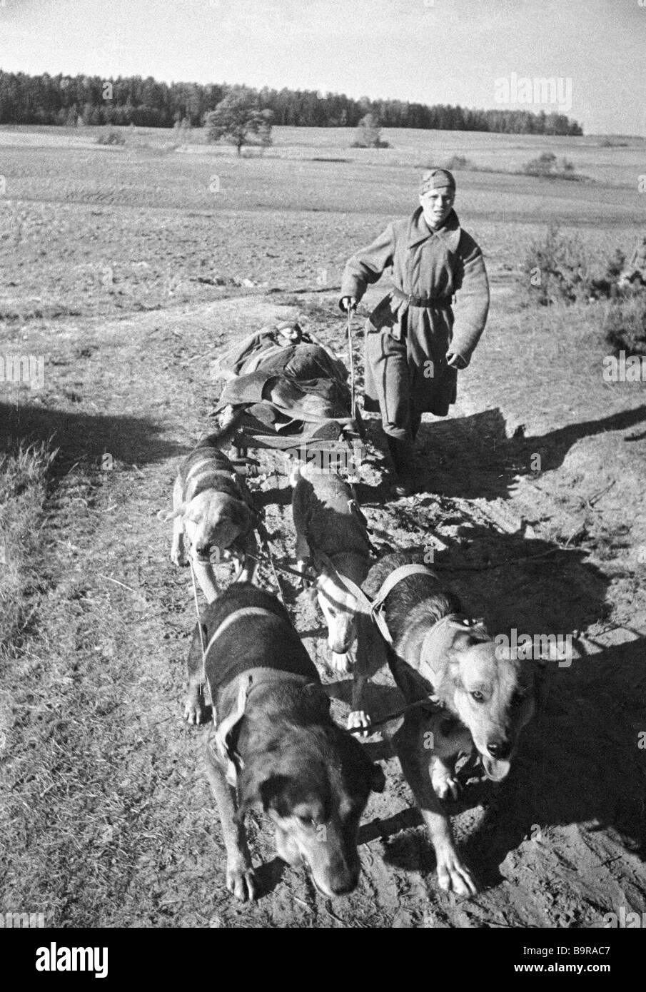 A dog team takes a wounded troop from the battlefield - Stock Image