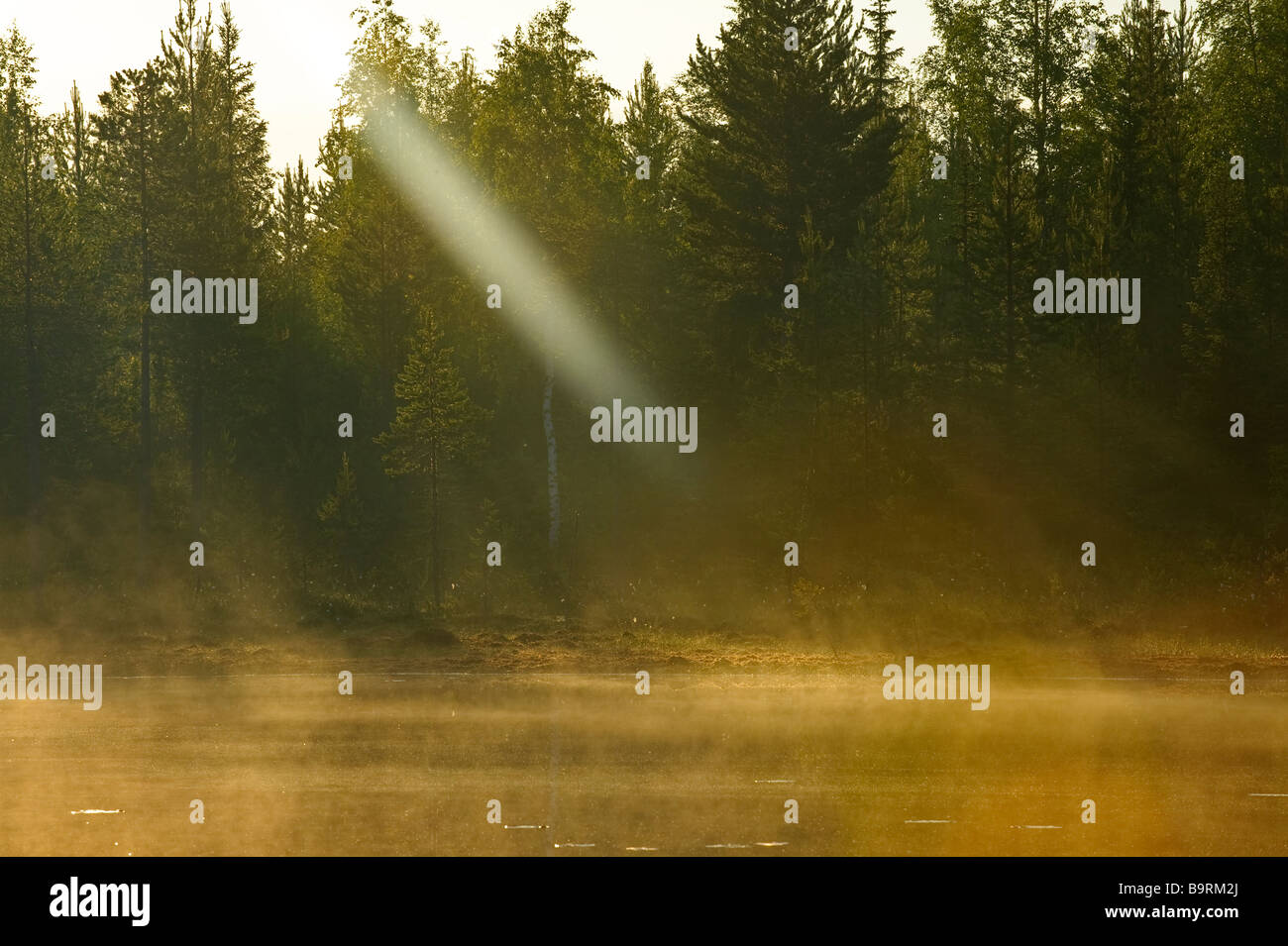 Dawn breaking in taiga forest Finland - Stock Image