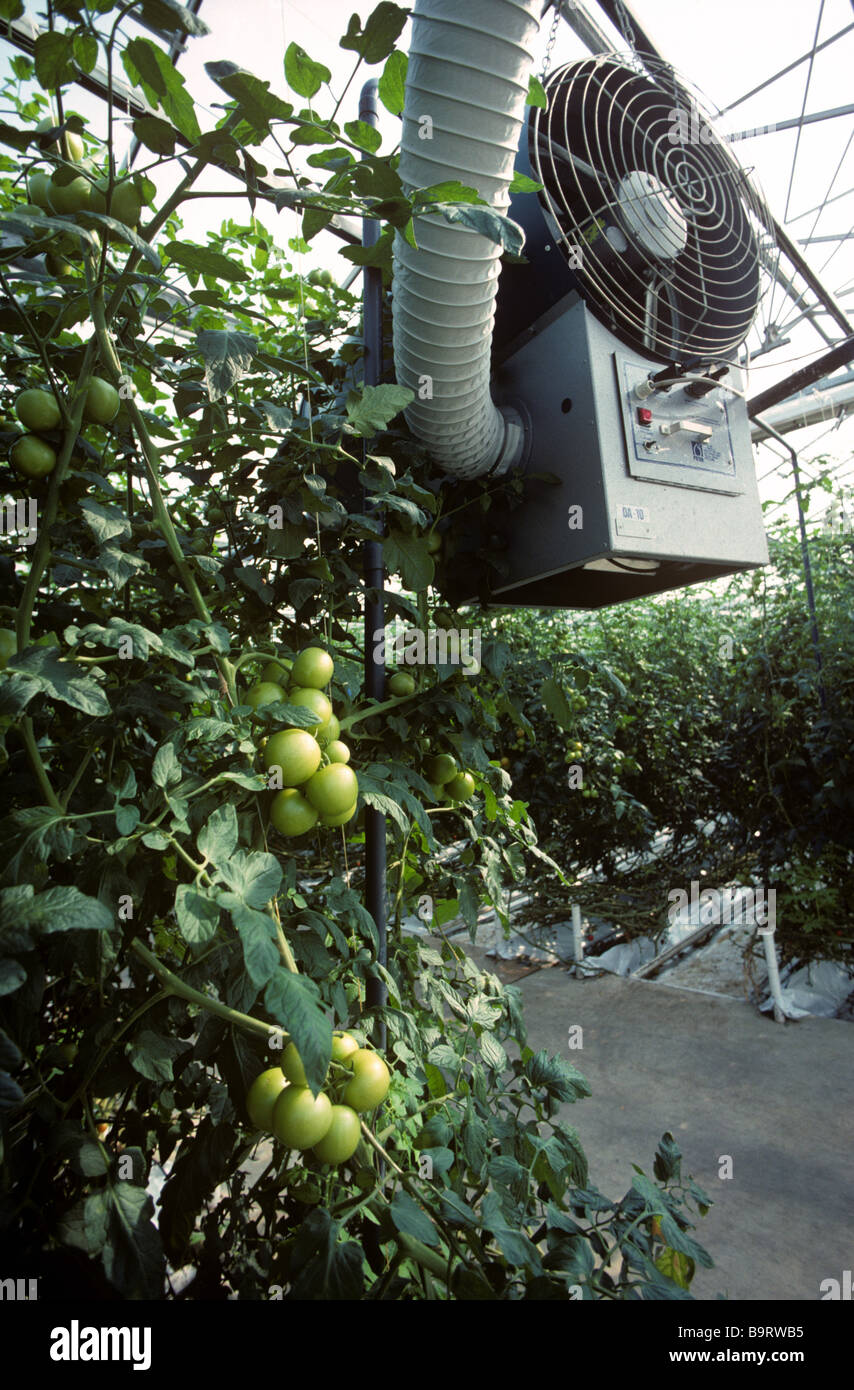 Heater fan ducting in large commercial tomato glasshouse - Stock Image