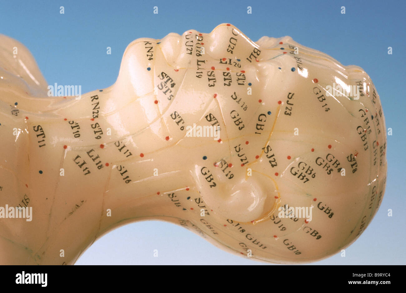 Acupuncture points of the human body here shown on a trainings model - Stock Image