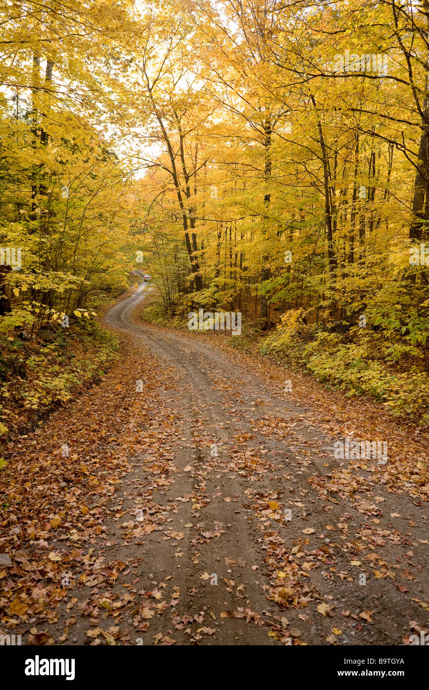 Winding Road. A gravel road winds through a forest yellow with fall leaves. A car is seen in the distance. Stock Photo