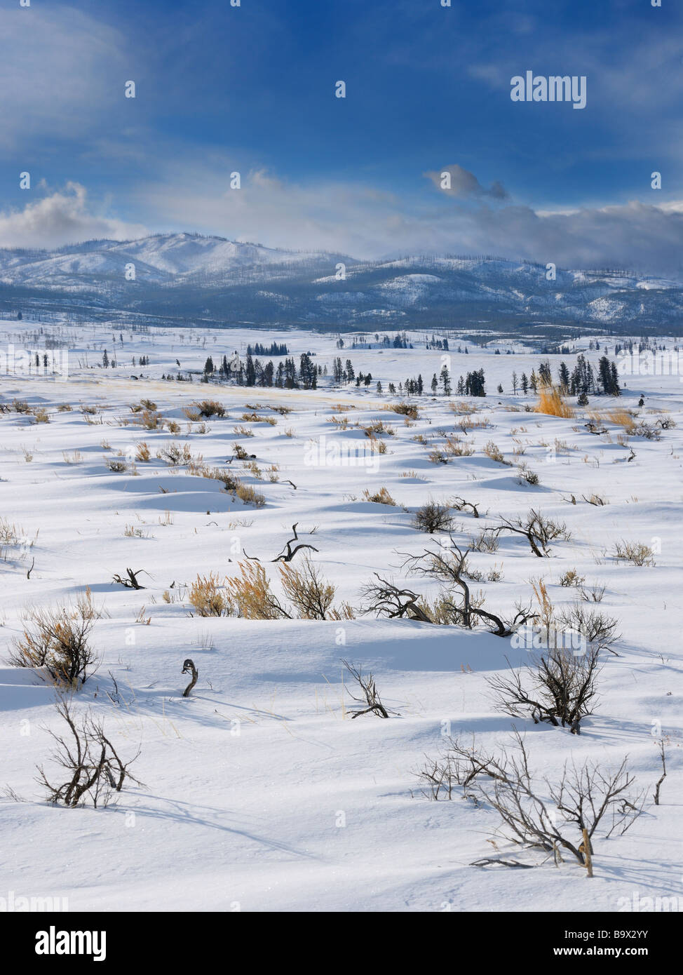 Sagebrush on Blacktail Deer Plateau in winter with Washburn Range in Yellowstone National Park - Stock Image