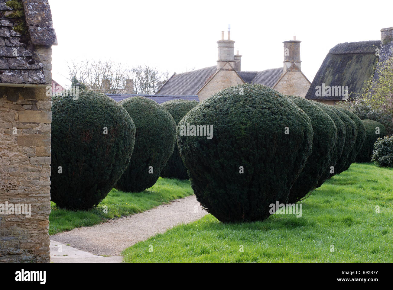 Clipped yews in St.Peter and St.Paul`s churchyard, Long Compton, Warwickshire, England, UK - Stock Image