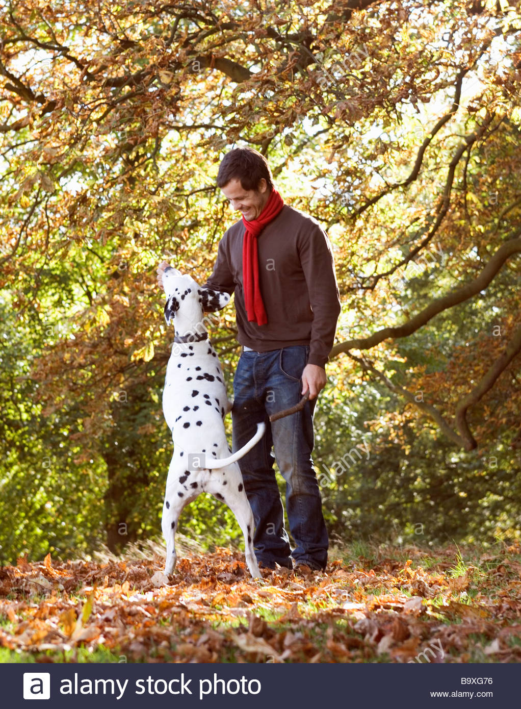 A young man playing with his dog amongst the autumn leaves - Stock Image