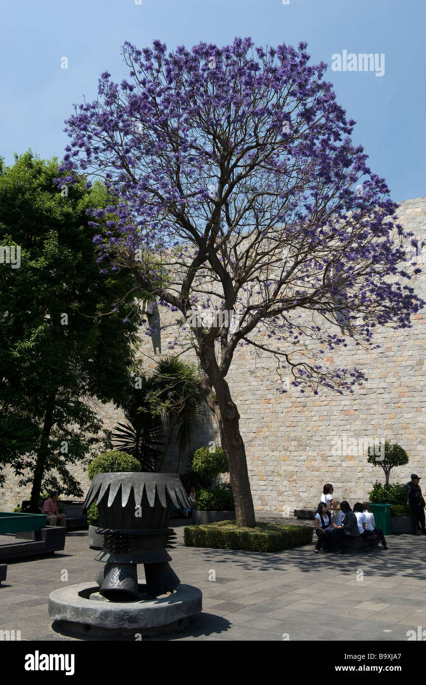 School children visting the National Anthropological Museum in Mexico city rest in the shade of a jacaranda tree. - Stock Image