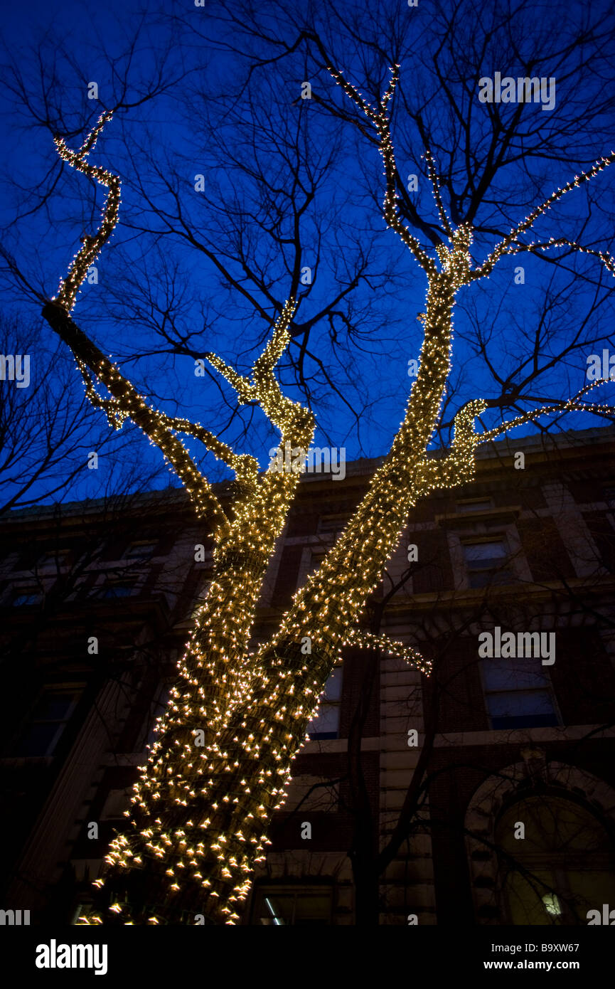 Christmas lights on a tree in the Columbia University campus.  Manhattan, New York City, USA. - Stock Image