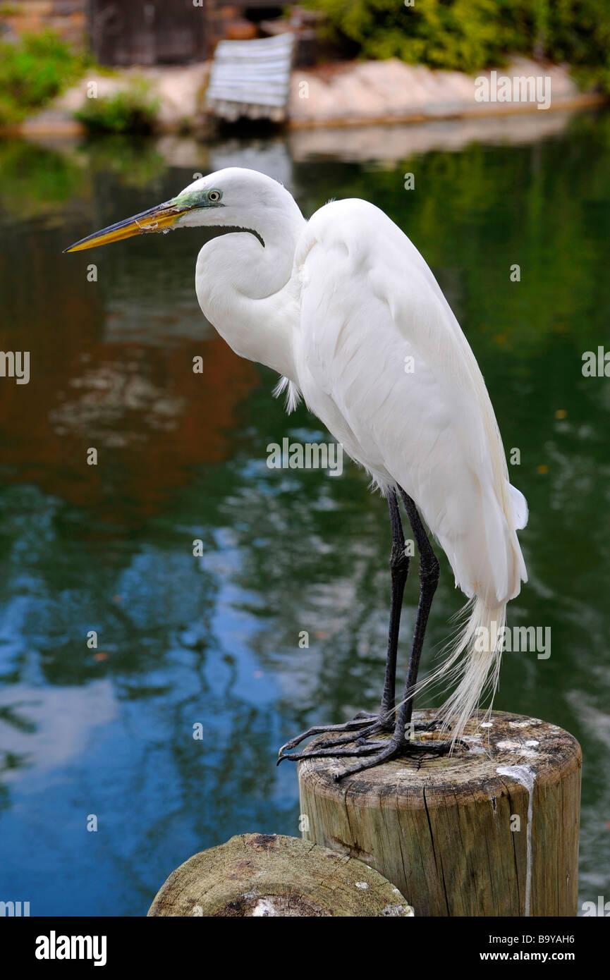 a white heron theme