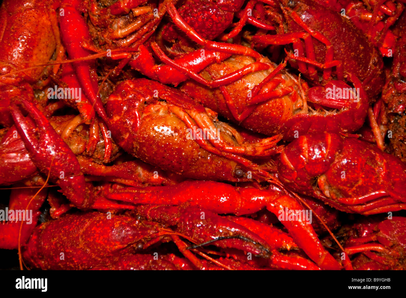 Louisiana boiled red crawfish cryfish in bowl - Stock Image