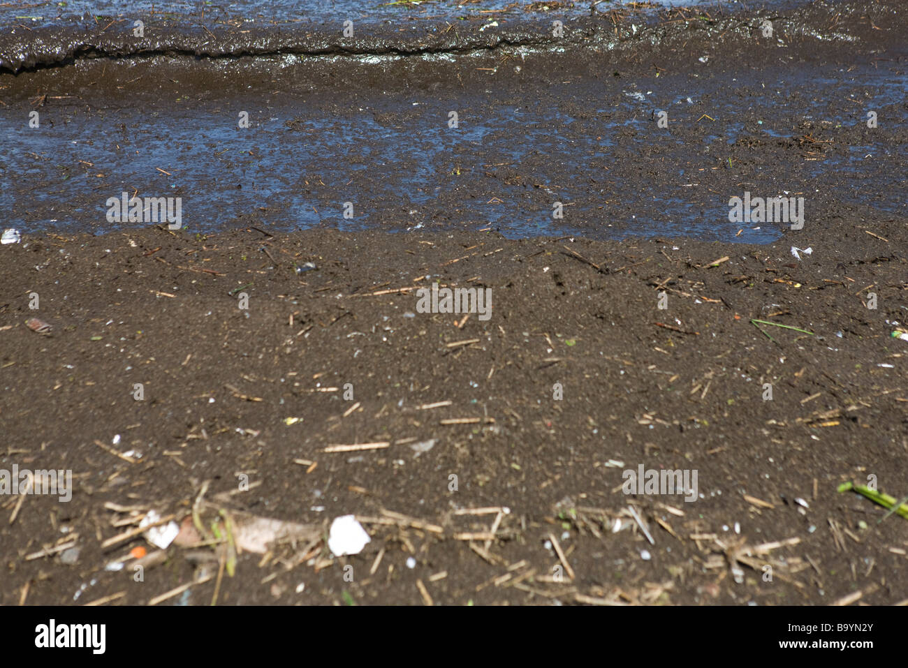 Muddy, polluted shore, close-up - Stock Image