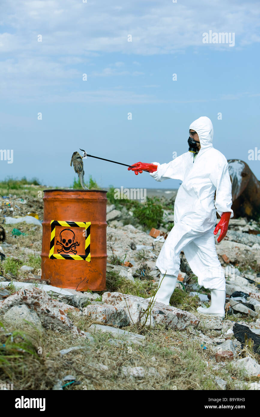 Person in protective suit placing dead fish in hazardous waste barrel - Stock Image