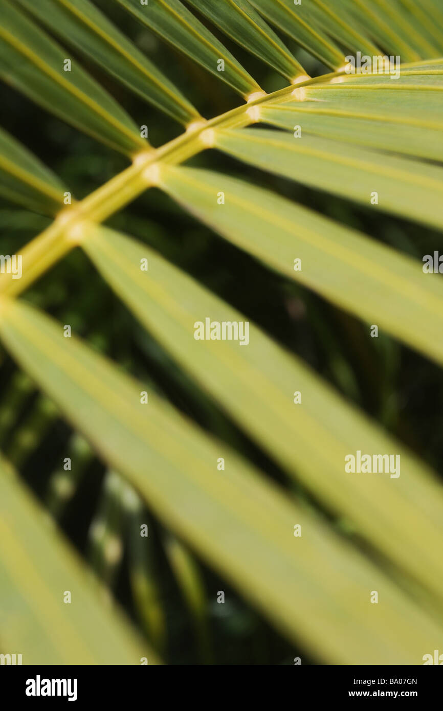 Closeup of a green branch - Stock Image
