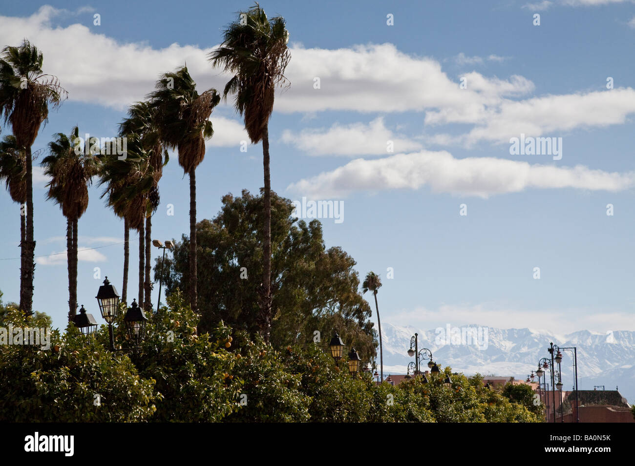 Palm trees with a view of the Atlas mountains in the background as seen from the Avenue Mohammed V in Marrakech - Stock Image