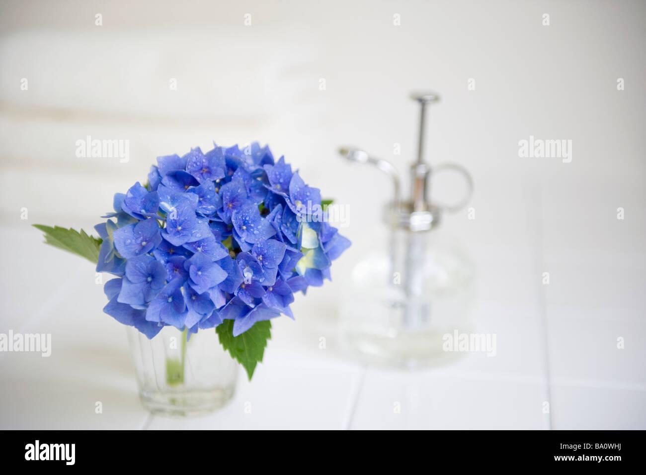 Hydrangea and sprayer - Stock Image