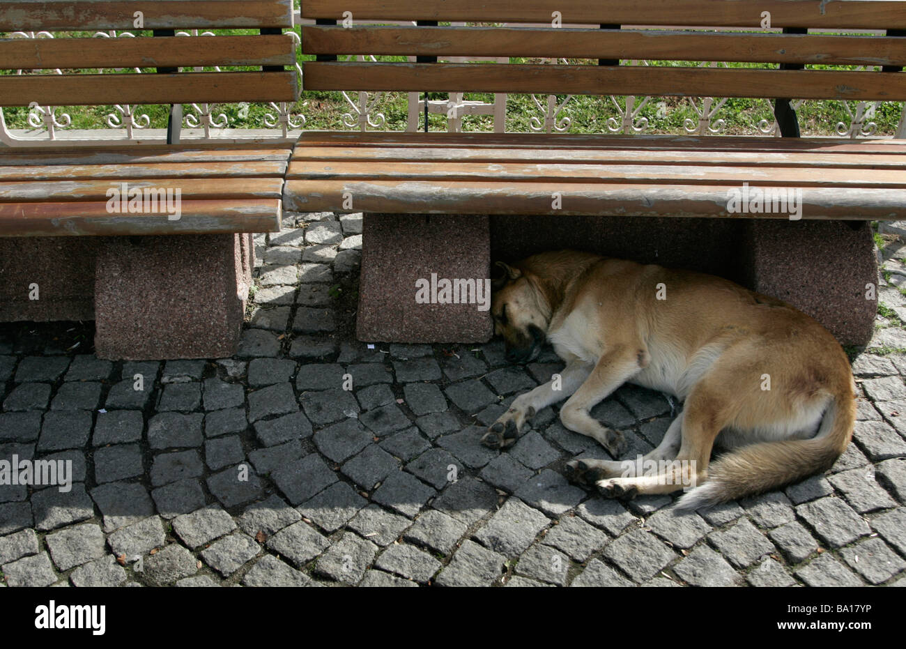 A stray dog sleeps in the shade ot a park bench in Istanbul in Turkey - Stock Image