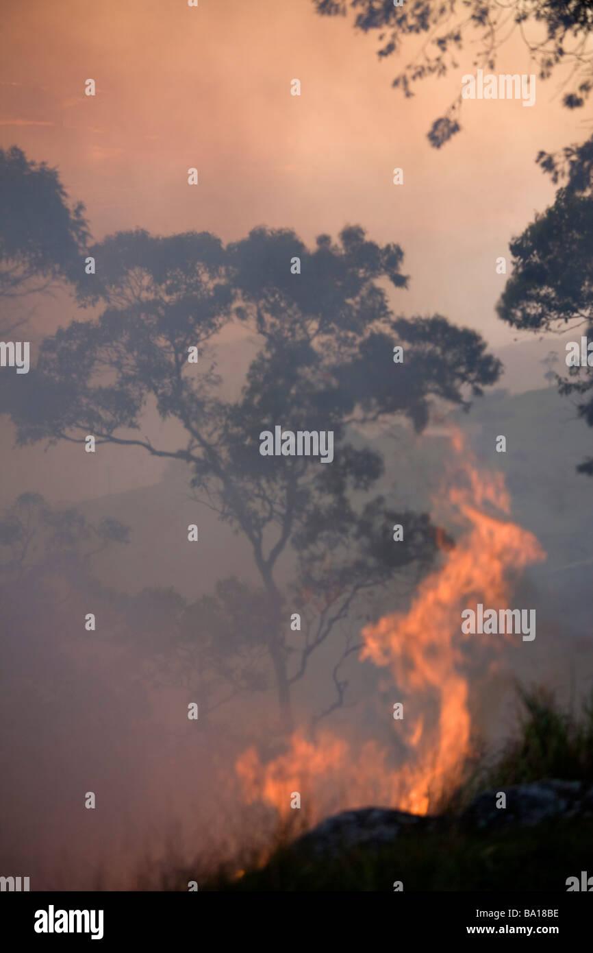 Bushfire - Stock Image