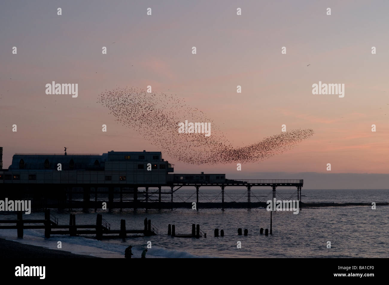flock of starlings roosting over Aberystwyth pier at dusk, wales UK - Stock Image