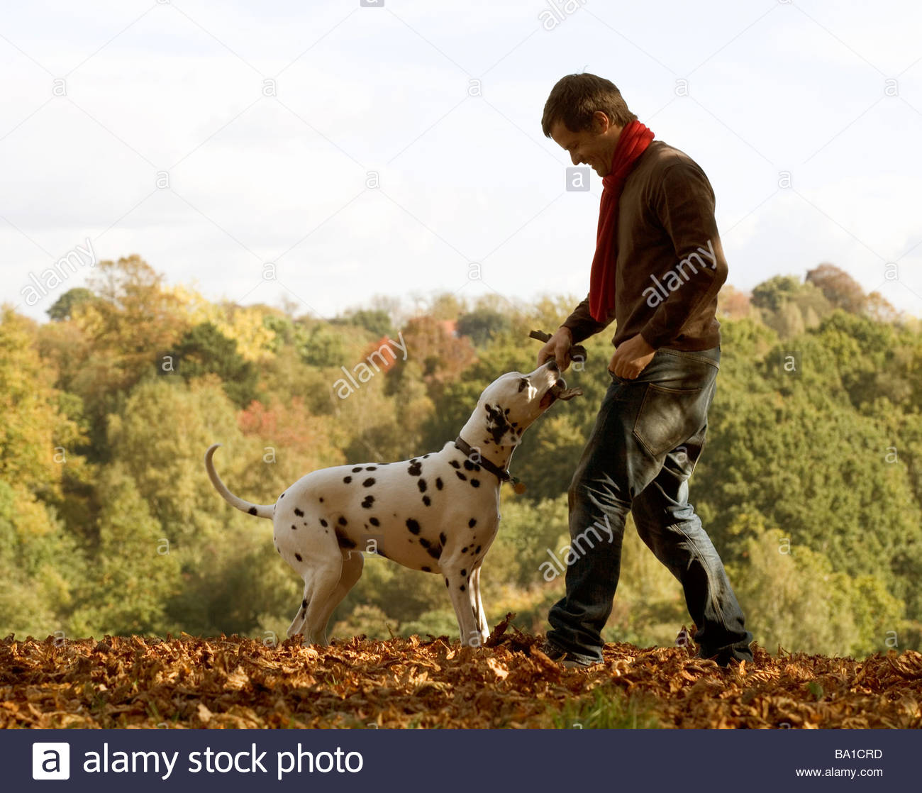 A young man playing with his dog amongst the autumn leaves Stock Photo
