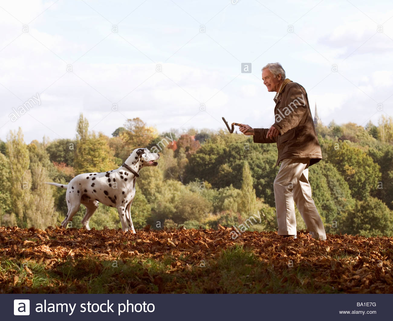 A senior man playing with his dog amongst the autumn leaves - Stock Image