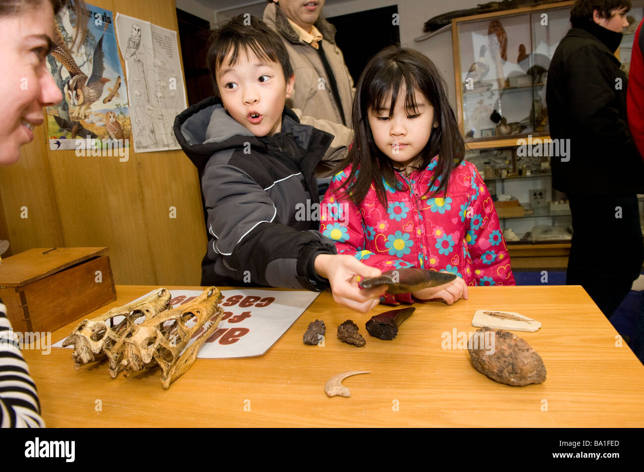 The museum at Oxford has a science day for kids where you get the chance to check out dinosaur bones - Stock Image