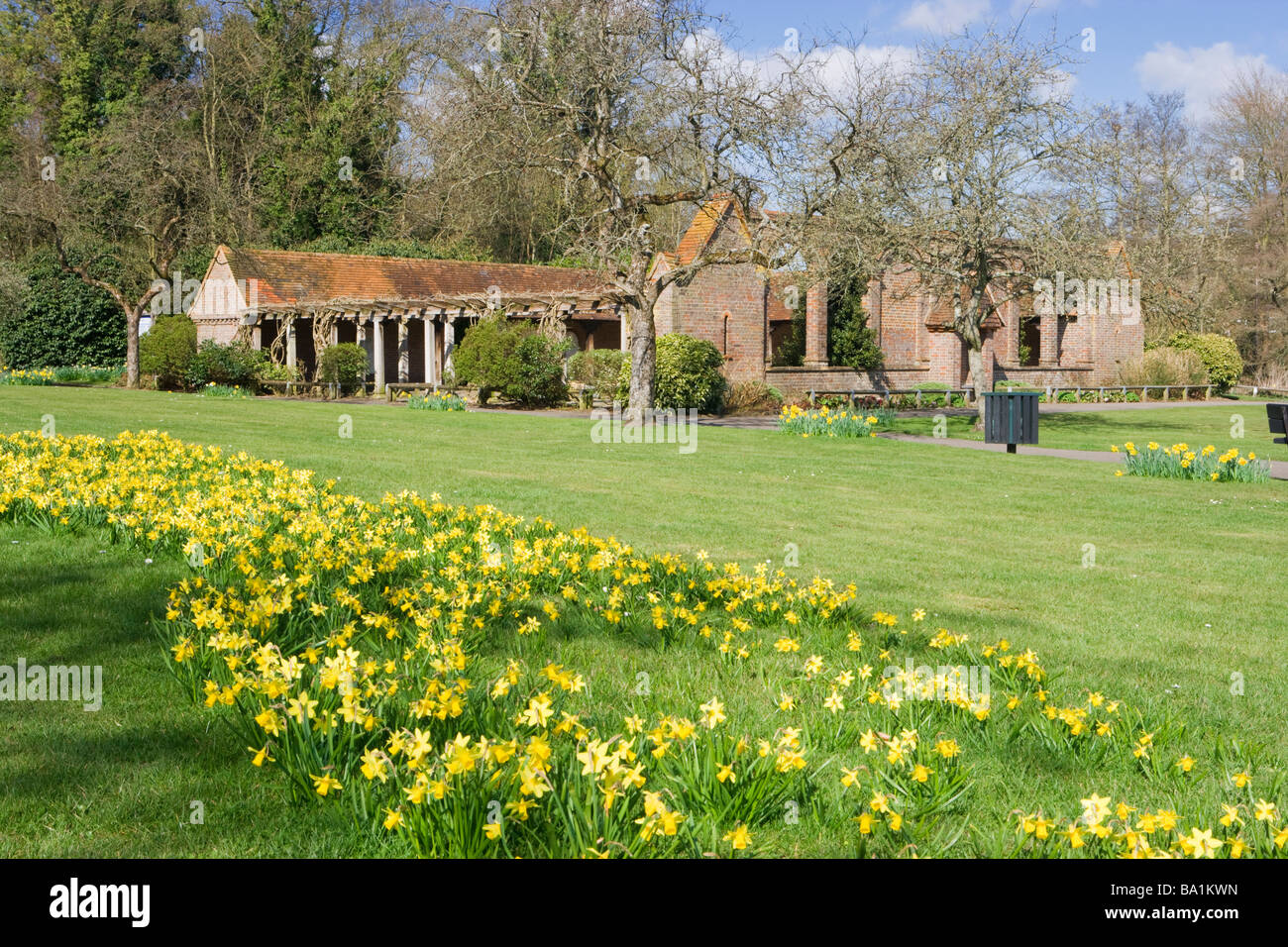 Phillips Memorial Cloister with daffodils, Godalming, Surrey, UK. - Stock Image