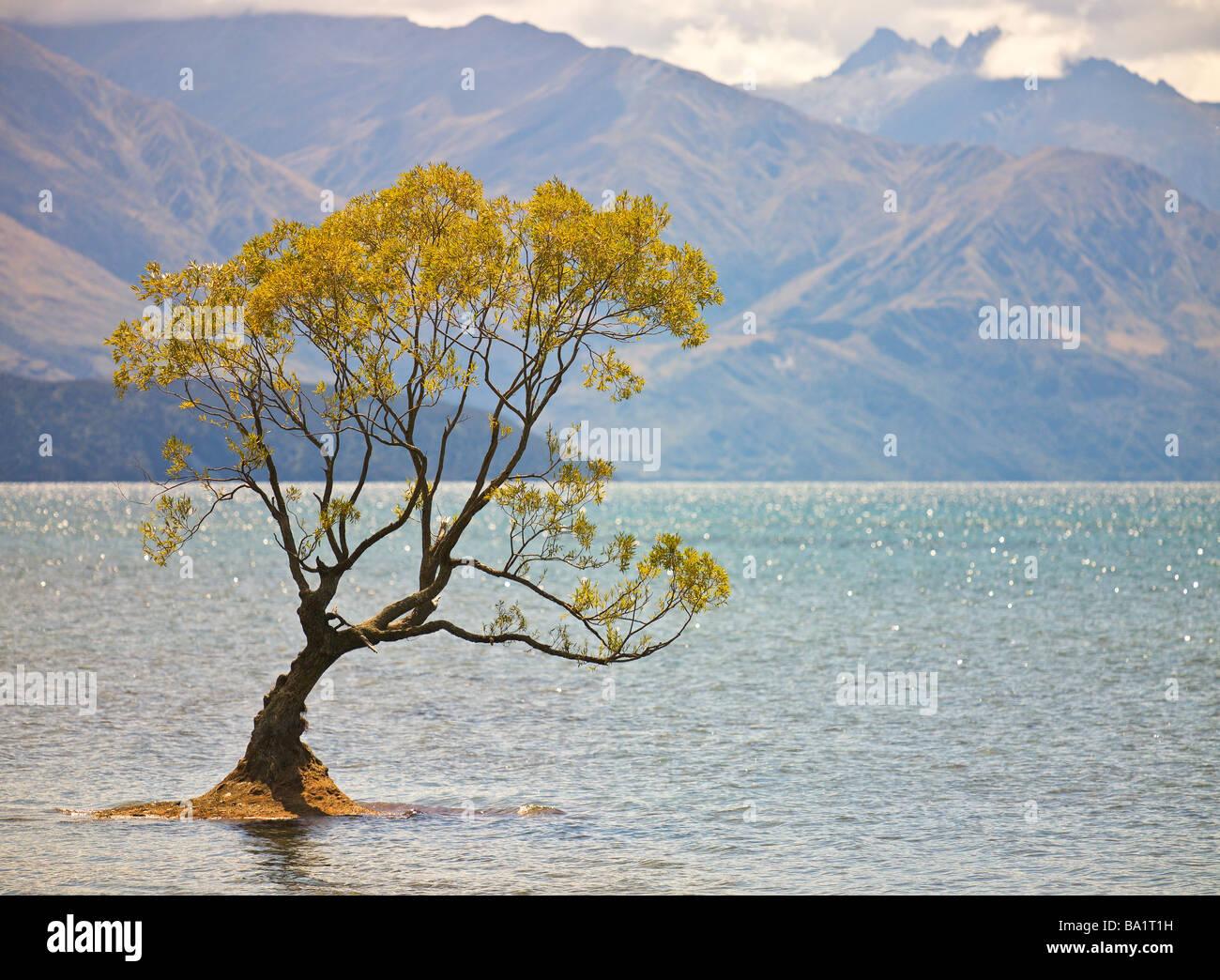 Tree, Lake Wanaka, Central Otago, New Zealand - Stock Image