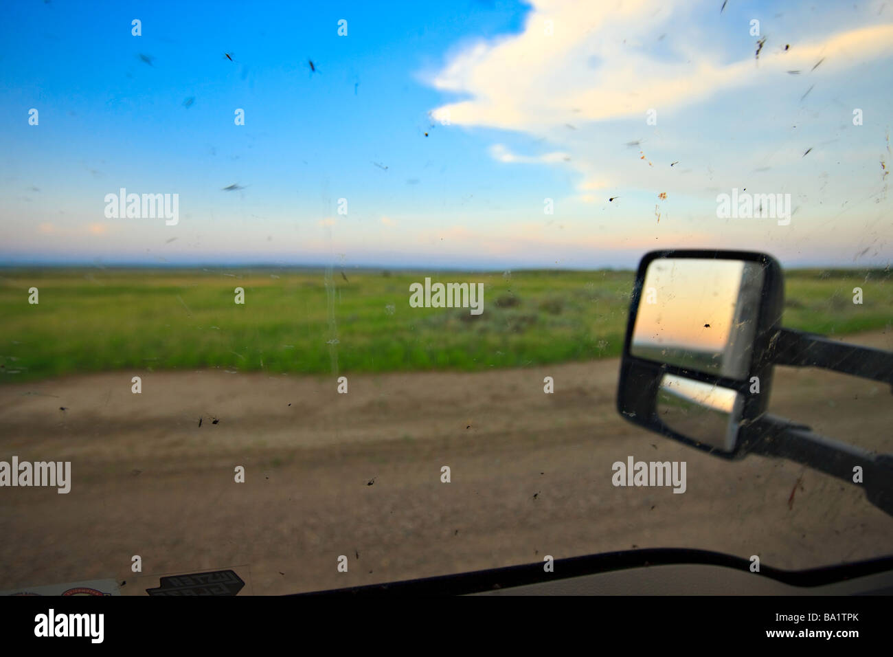 Mosquitoes outside the truck window while driving the Frenchman River Valley Ecotour in the West Block Grasslands - Stock Image