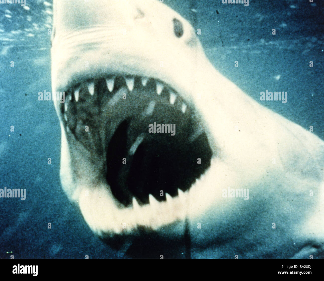 JAWS  1975 Universal film - Stock Image